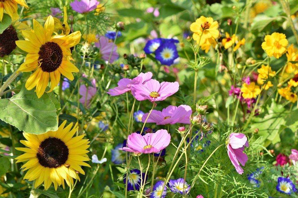 Laka Pelna Inspiracji Lakowe Kwiaty Na Urodziny Eurogarden Pl
