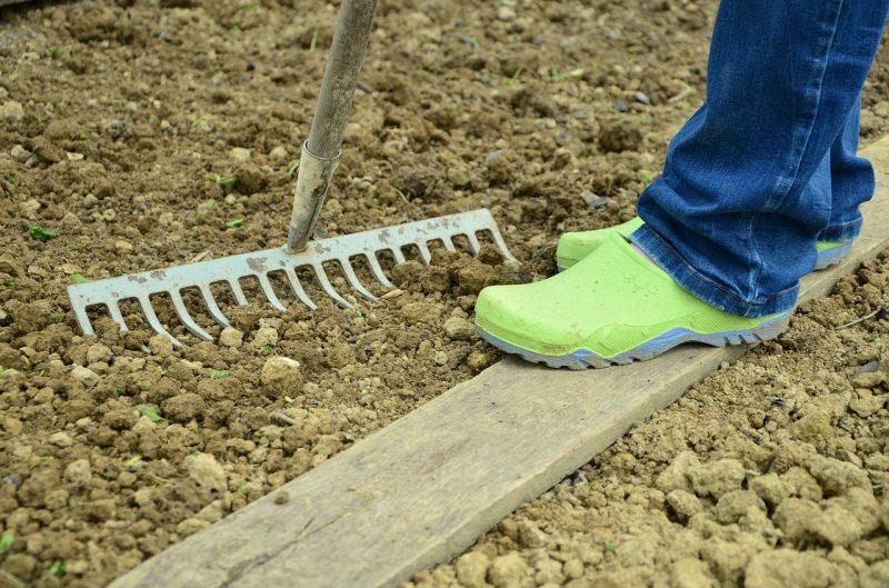 sadzenie malin, malina, pielęgnacja malin, prace w ogrodzie